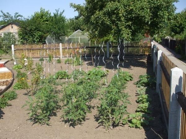 Ideen-Garten (8)