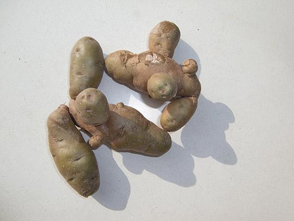 Hörnchenkartoffeln