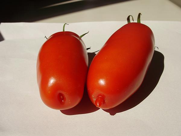 Lange Tomate